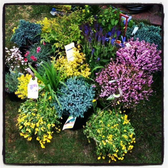perennial garden plans partial