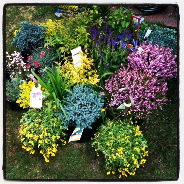 25 best ideas about perennial gardens on pinterest for Part shade garden designs