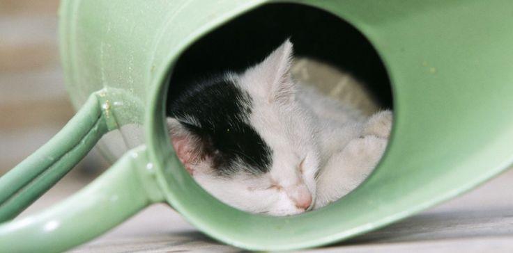 Même bien caché dans le jardin, votre chat sera géolocalisé grâce à son collier GPS. ©ARDEA/MARY EVANS/SIPA