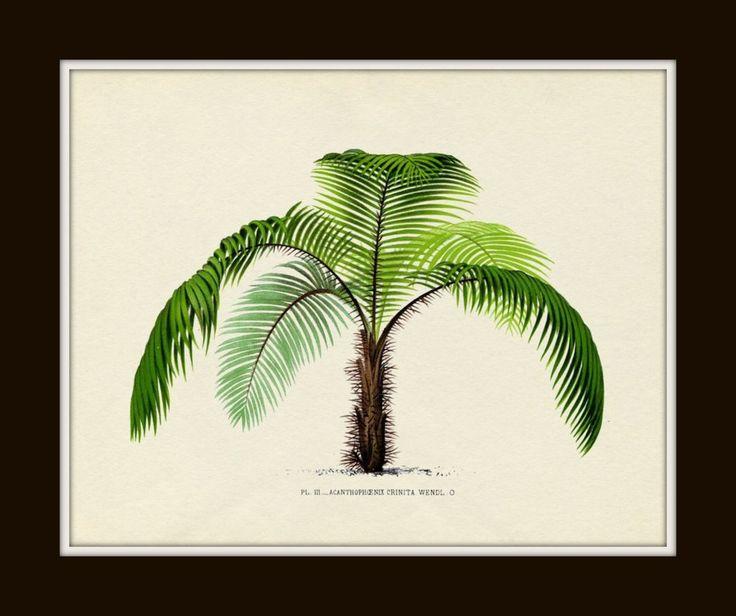 Antique French Palm Tree Series Plate 3 Botanical 1878 8 x 10 Art Print Wall Decor 1