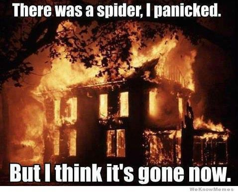 Spiders: Fear vs. Fact   American Pest Control
