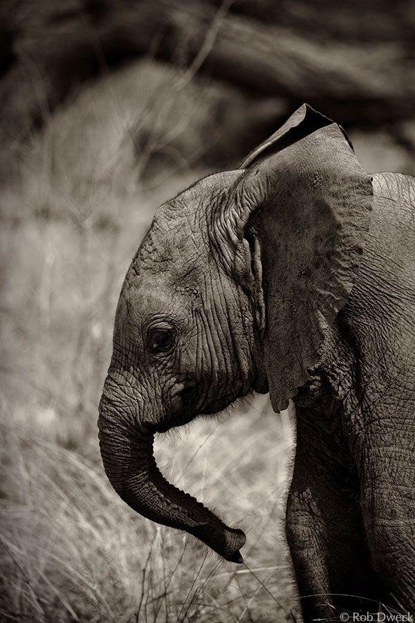 My favorite animal.