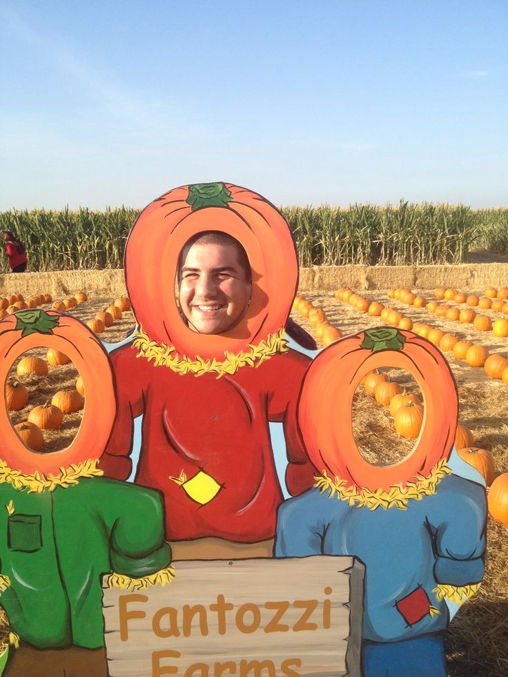 corn maze in patterson 2013 - Face In Hole Halloween