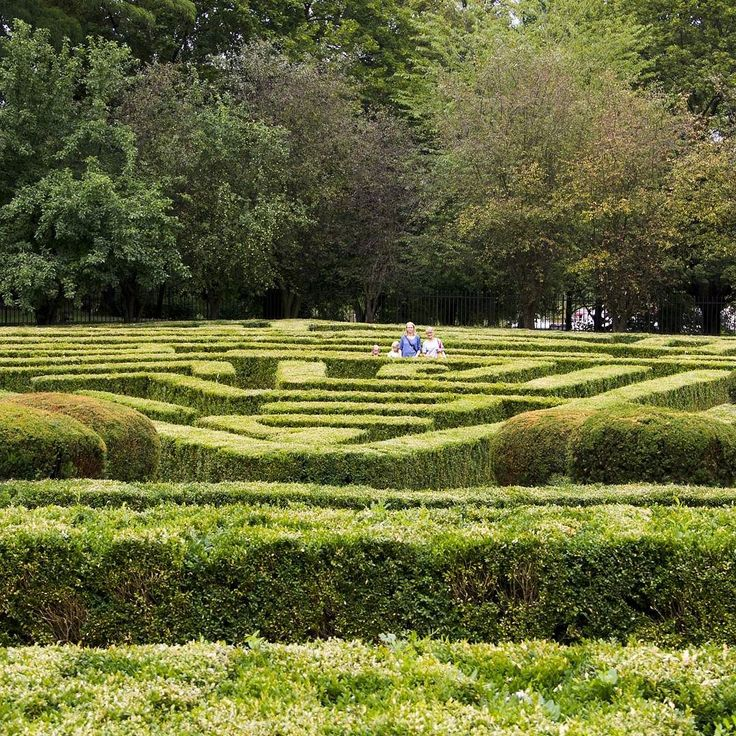 #maze #labirynt