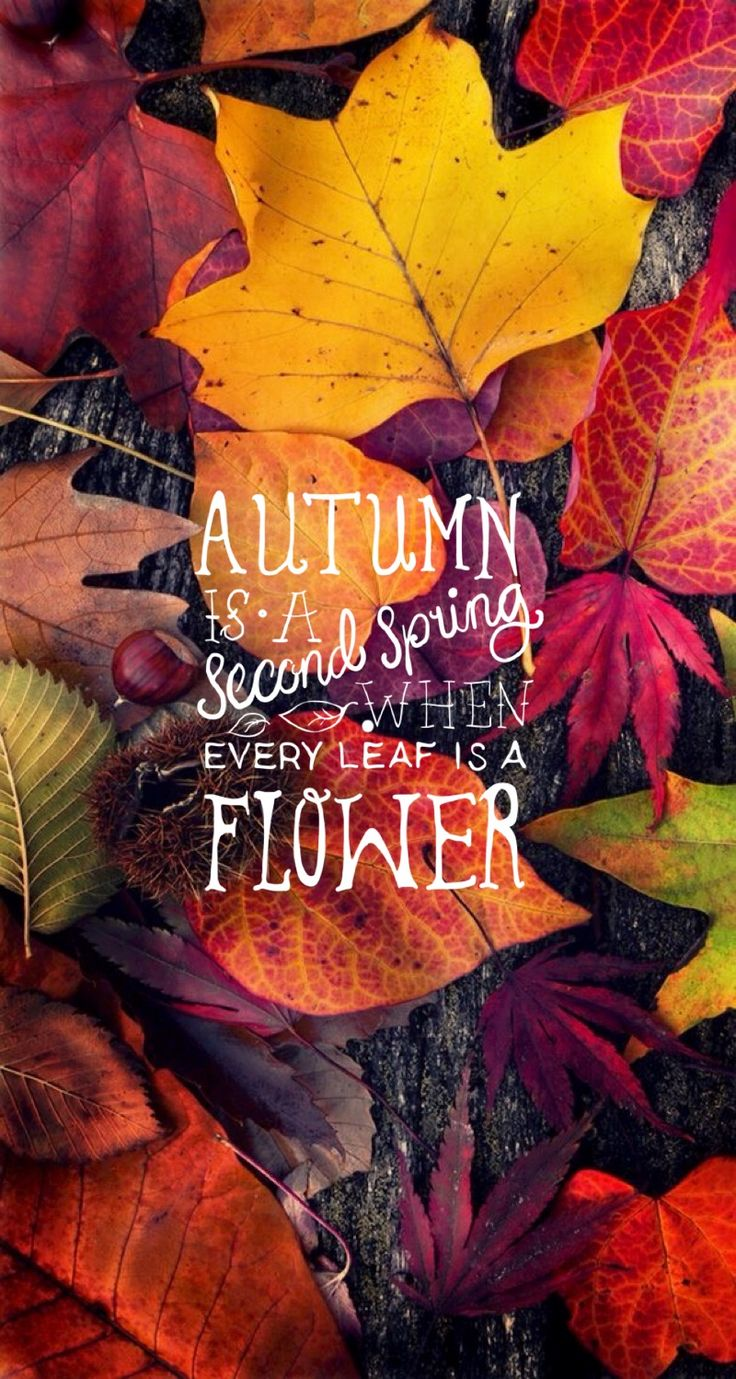 Autumn Quote iPhone Mobile Wallpaper ♚