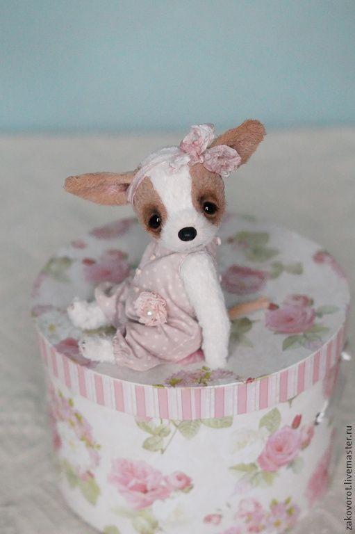 Купить Чихуа София - белый, чихуа, собака, собачка, подарок, щенок, подарок на день рождения