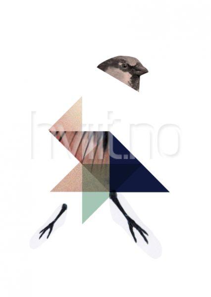 Elements of birds 3