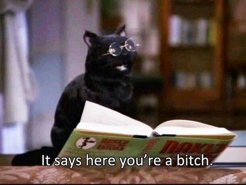 Imagem de cat, funny, and quote