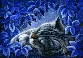 Картинки по запросу синие цветы