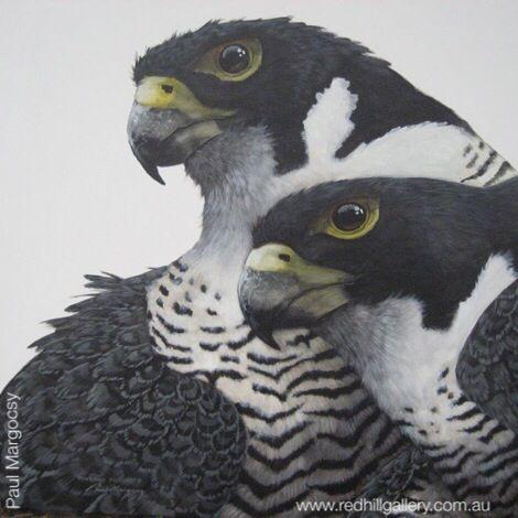 "Artist Paul Margocsy painting ""Australian Peregrine Falcon"" 101x102cm. Red Hill Gallery, Brisbane. www.redhillgallery.com.au"