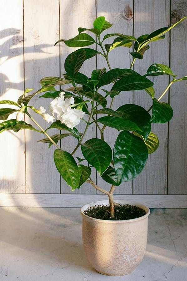 The 7 Best Houseplants for Stressed-Out PeopleCrystal Riemer