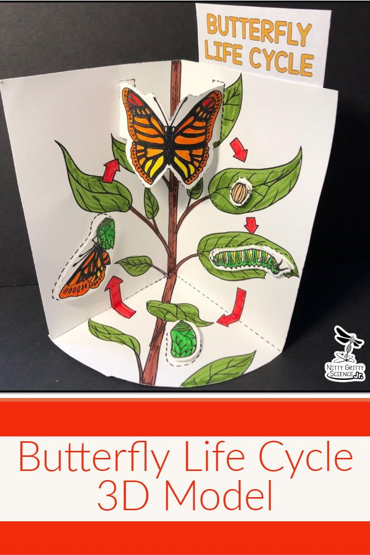 Butterfly Life Cycle Model 3d Model Butterfly Life Cycle Life