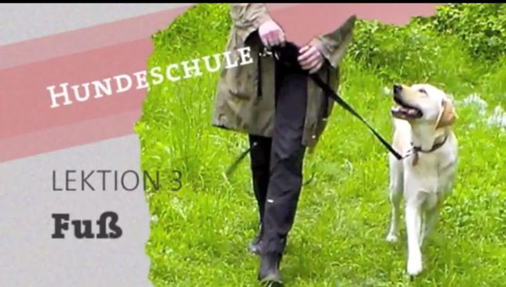 4 Methoden: Hund BEI FUß laufen beibringen Hundeerziehung Leinenführigke...