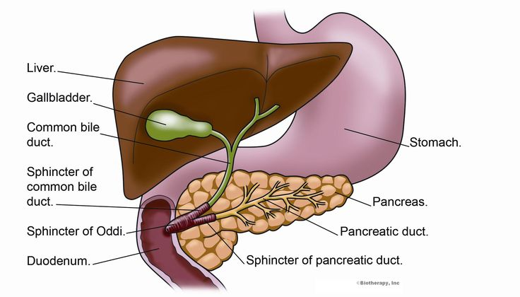 Bile Duct Problems Natural Remedies