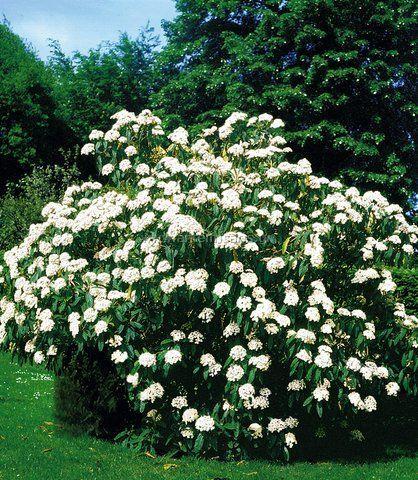 10 θάμνοι για τον κήπο - Φυταγορά Σερρών