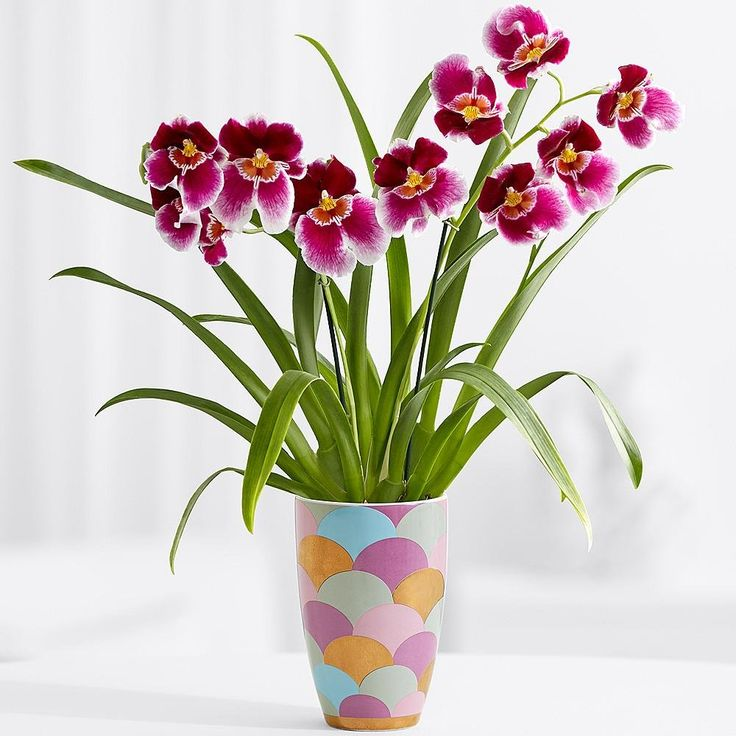 94 best images about orchideen on pinterest modern vases oncidium orchid and purple orchids - Flowers planted may complete garden ...