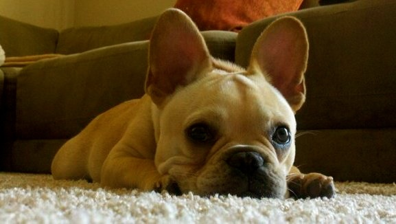 Frogging Frenchie, love ALL of them!
