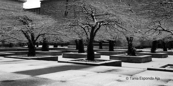 Hermosa soledad www.taniaespondaaja.com #photography #fotografia #byn #b&w #trees #loneliness #beautifull #landscape #art
