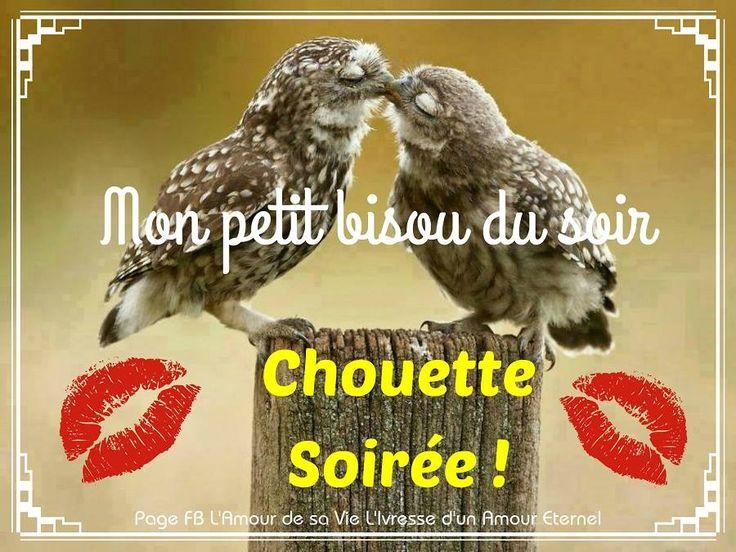 Mon petit bisou du soir. Chouette Soirée ! #bonnesoiree chouettes oiseaux bisous