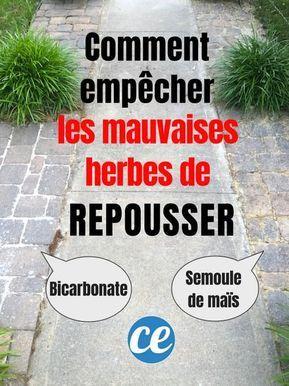 Remark Tuer les Mauvaises Herbes (Et EMPÊCHER Qu'elles Repoussent !).