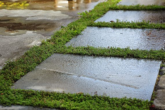 creeping thyme with pavers | YARD | Pinterest