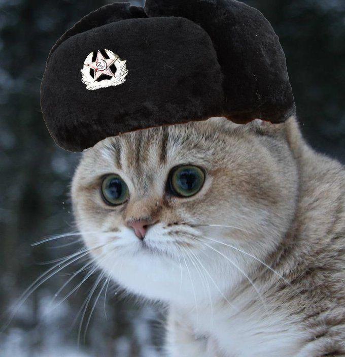 Soviet Cat Party (@SovietCatParty)   Twitter