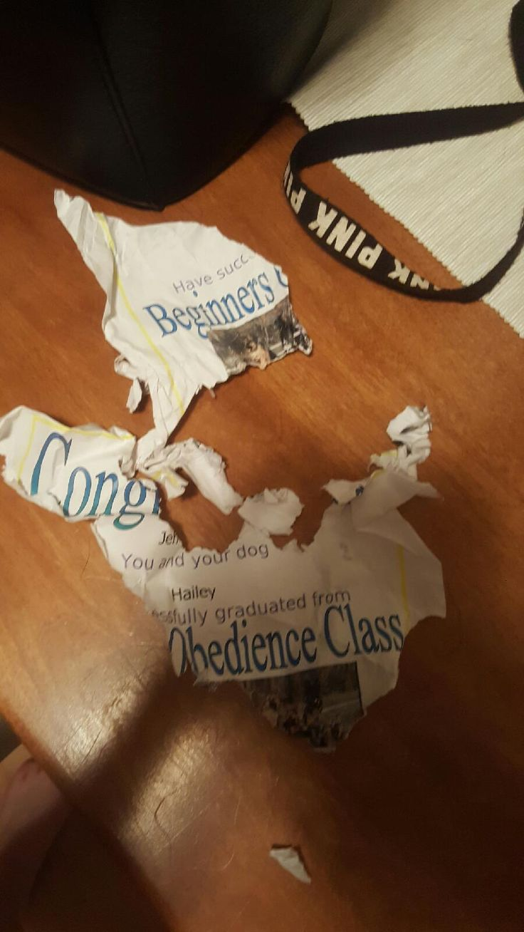 The 25 best funny certificates ideas on pinterest fun awards last night my dog graduated from a beginner obedience class this morning we found her certificate like this via classy bro aiddatafo Image collections