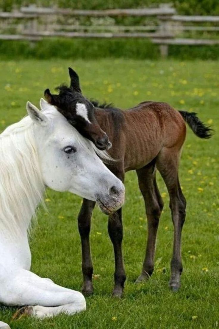 Foal loving his mommy horse More