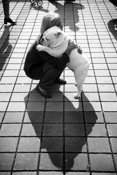 English bulldog love..they always know when you need a hug..looks like my Berda dog