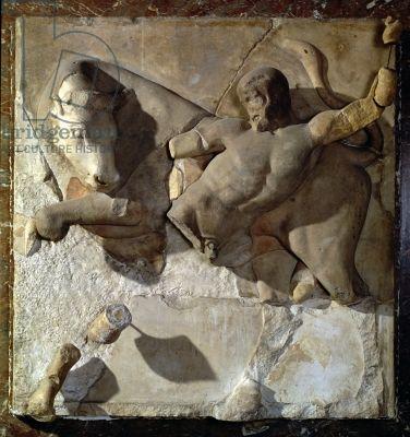 Eracle combatte l'Toro di Creta, uno di una serie di dodici metope raffiguranti le Fatiche di Ercole dal Tempio di Zeus a Olimpia, primo periodo classico, BC c.470-457 (marmo pario)