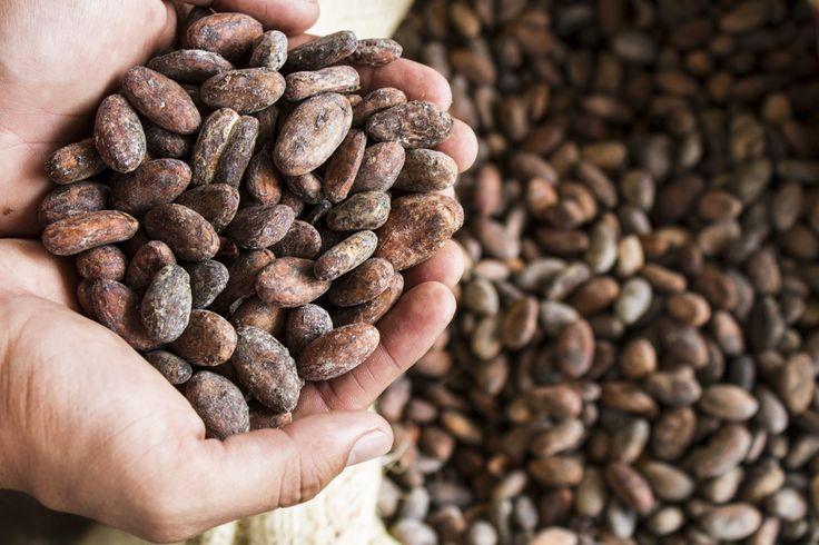 Cacao ecuatoriano | Andres Alvarez