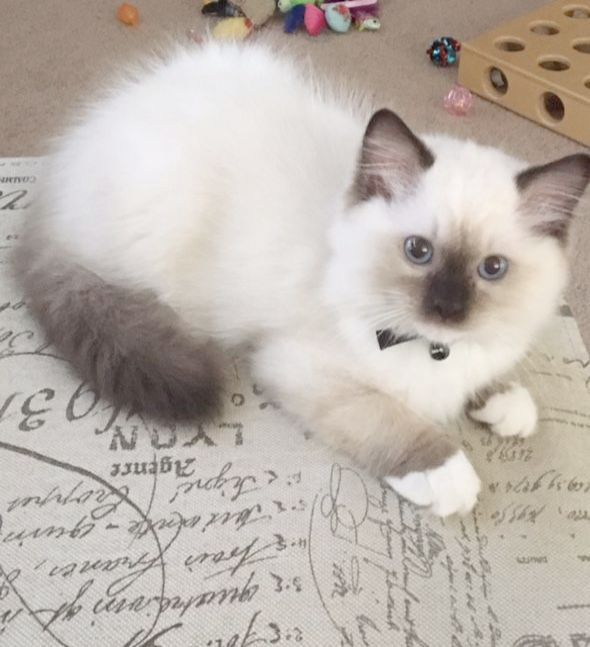 What I M Cold And Cool Kittens Cutest Cute Cats Kittens And Puppies