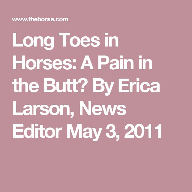 Long Toes in Horses: A Pain in the Butt? By Erica Larson, News Editor May 3, 2011