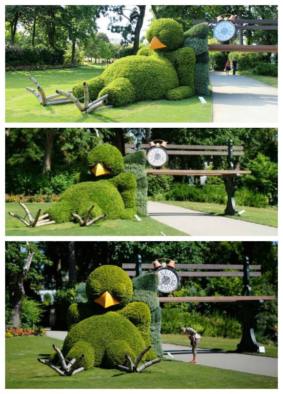 This hedge is probably one of the cutest hedge we've ever seen!…