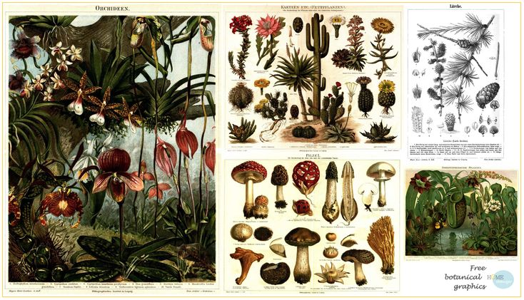 Old Botanical Graphics Free Printables Home Changer Cool Posters Prints Graphic