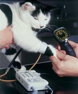 Hypertension (high blood pressure) in cats   international cat care