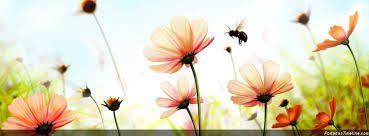 Image result for fotos de flores en floreros