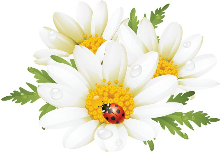 Como la miel de abejas...mil flores.Esta vez,algunas flores de buen tamaño y en formato png,para que...