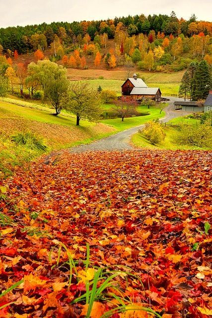 Autumn. Looks like heaven to me. Unbelievably beautiful and peaceful