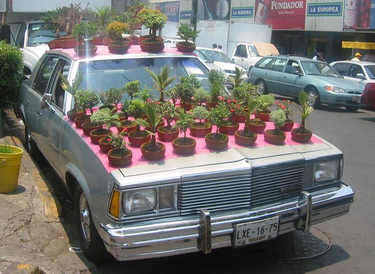 Bonsai (Mexico City) by Katie Holten