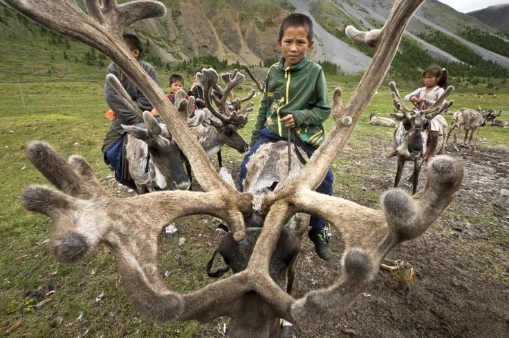 Mongolia is twice the size of Texas, but home to only 2.6 million people. The sparse, desolate lands are difficult to live on and the frigid winters are harsh and overbearing, which is why the country's Dukha people have relied heavily on reindeer in nearly every facet of their lives for thousands of years.