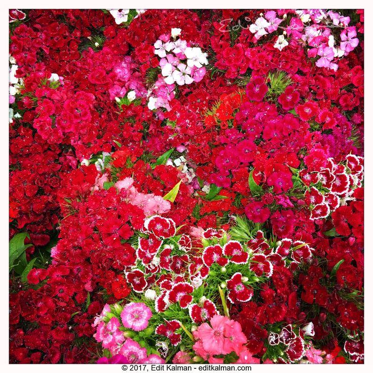 Christmas #Christmas, #Colors, #Flowers, #Red - https://goo.gl/XRmQ2A