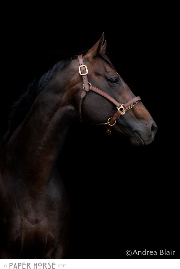 Stride Away Thoroughbreds | Farm {Salmon Arm/BC Equestrian Photographer}