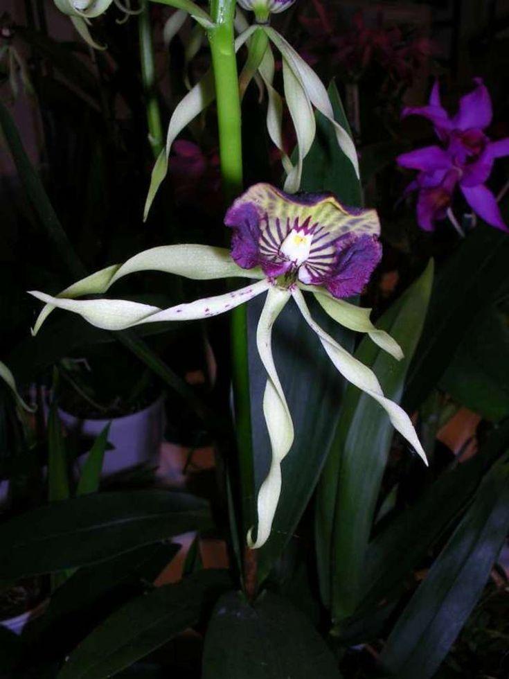 les orchidees   si les orchidées ont ainsi colonisé presque tous les milieux