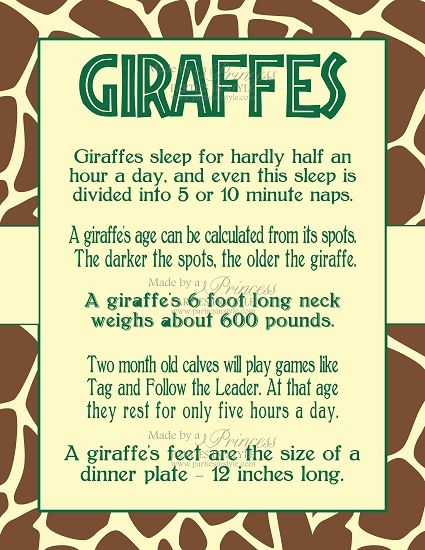 Safari Wild Adventure Printable 8x10 Giraffe Facts Poster, and their tongues are purple and very long: 12-18 inches