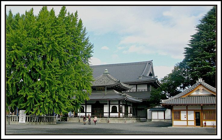 Nishi Hongan-ji is one of two temple complexes of Jodo Shinshu in Kyoto, the other being Higashi Honganji. Nishi Honganji was established in 1602 by the Shogun Tokugawa Ieyasu. It huge complex of temples and many gates. But I was impressed mostly by this beautiful gingko biloba tree (on the left). I have never seen such a big gingko.