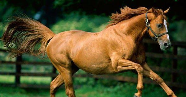 Άγνωστοι σκότωσαν άγρια άλογα στον Τύρναβο