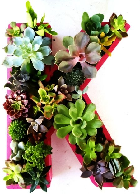 Planting A Stunning Succulent Garden | A1 Pictures