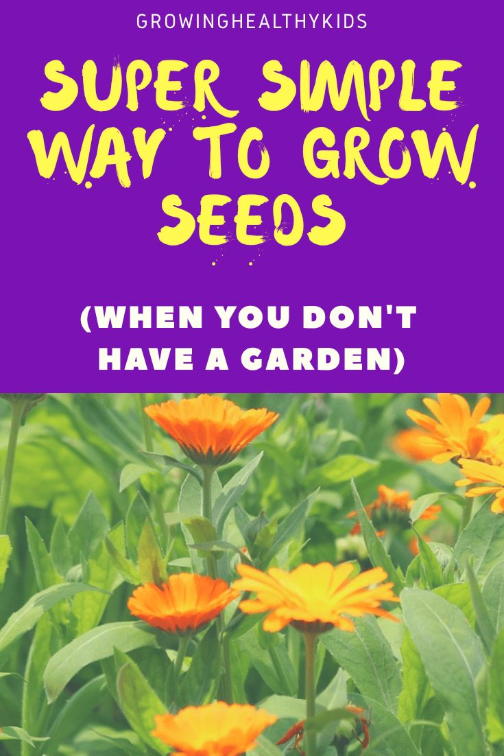 Super Simple Way To Grow Seeds (When You Have NO Garden)
