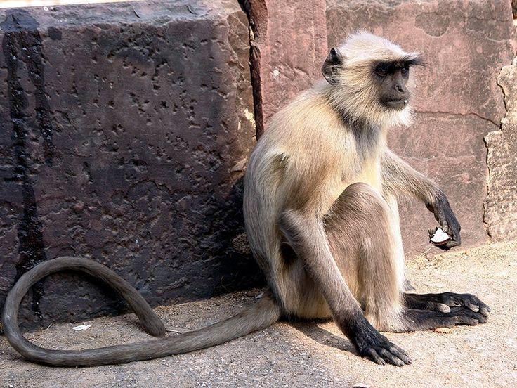 Ghatigaon Wildlife Sanctuary - in Madhya Pradesh, India